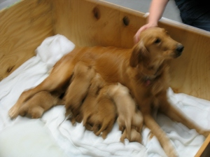 10 PUPPIES!!!